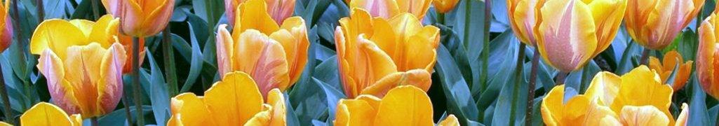 Грунт цветочный
