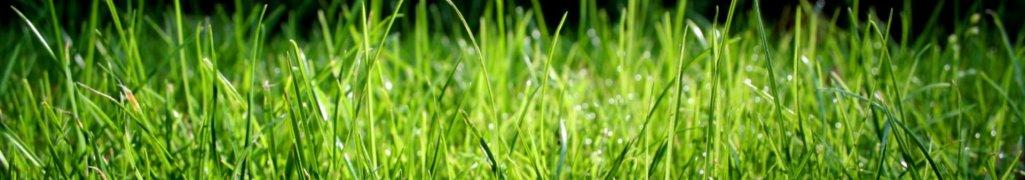Грунт для газонов